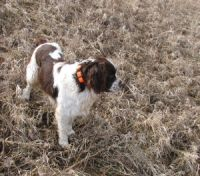 Three Hills Hunting Dog
